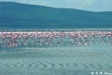 Lake Nakuru 01