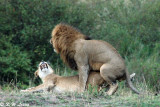 Wild Animals in Masai Mara