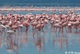 Flamingos (DSC_7982)