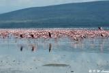 Lake Nakuru 03