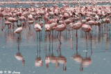 Flamingos (DSC_8027)