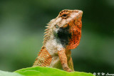Changeable Lizard 08