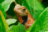 Changeable Lizard 10
