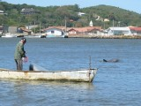 The dolphins and fisherman cooperate in the bay