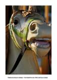 Merry-go-round horses 23