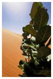 Mauritanie - Puiser la vie 30