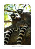 Madagascar - The Red Island 12