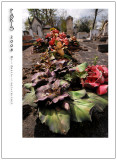 Pere Lachaise cemetery 1