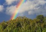 Partial But Brilliant Rainbow 17254