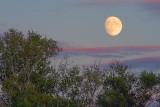 Moonrise 17631