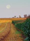 Moonset Over Fields 18162