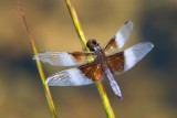 Dragonfly 18202
