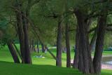 Park Trees 18562