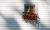 Flowers In A Cocked Window 18992