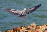 Heron Landing 34204