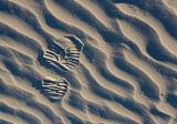 Footprint In Sand 20090222