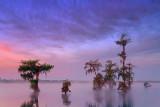 Lake Martin Dawn 46686