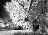 Autumn Tobacco Barn 24793 (faux IR)