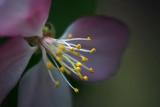 Blossom Closeup 20090524