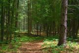 Morris Island Trail 49514