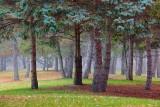 Park Scene 10986