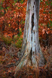 Dead Tree Trunk 11030