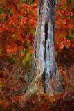 Dead Tree Trunk 11030 Art