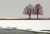 Trees Beside Freezing Pond 20091207