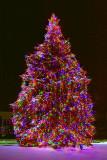 Gilmore's Christmas Tree 20091217