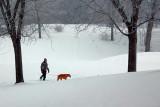 Snowscape 20100114