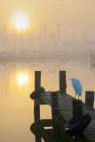 Egret Watching The Sun Rise 4709