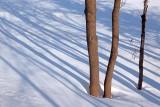 Snow Shadows 20100129