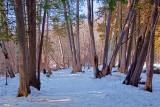 Snowy Trail 20100212
