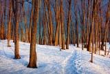 Snowscape At Sunrise 14400