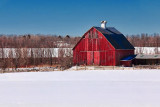 Red Barn In Snowscape 14603