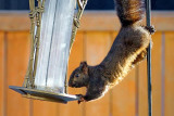 Squirrel Feeder 20100316