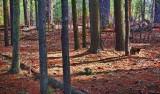 Forest Floor 14931