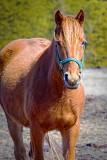 Curious Horse 20100324