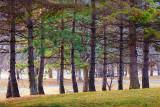 Park Pines 20100325