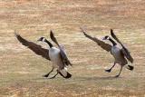 Synchronized Landing 15156