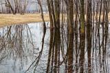 Swamped Trees 20100330