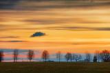 Laneway Trees At Sunrise 15582-5