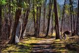 Jack Pine Trail 15774