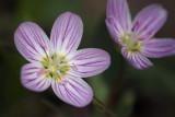 Little Wildflowers 20100422