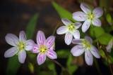 Little Wildflowers 53109