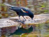 What A Pretty Bird 53272