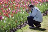 Tulip Shooter 16063