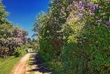 Lilac Lane 16399