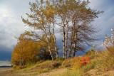 Dune Trees 20071019