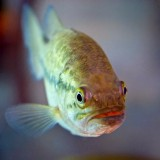Fish Face 70879